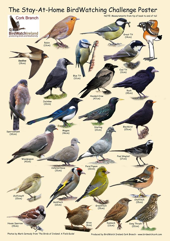 Irish Bird Guide
